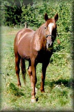 Ami 2001