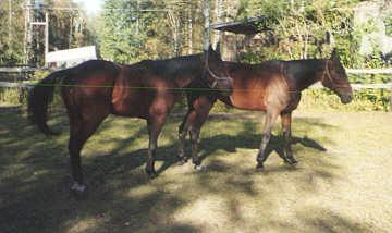 Queen Af Hocksbo and Queen Onyx